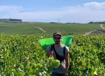 """Sébastien Burel : """"Ambiance morose dans le vignoble français en dépit d'une vendange pleine et de qualité """""""